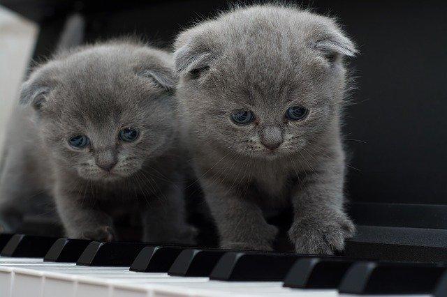 Dur und Moll Katzen